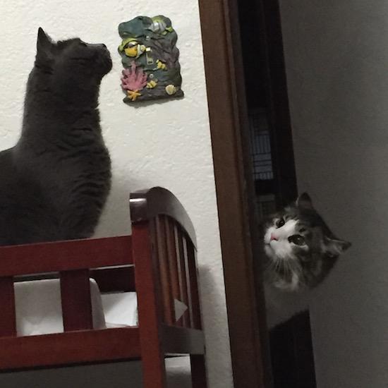 Mid-Air Peek-A-Boo